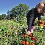 Greater Nanticoke Area Community Garden's success celebrated