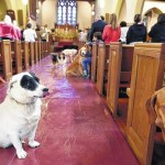 Grace Episcpal Church in Kingston holds blessing for animals inside church sanctuary