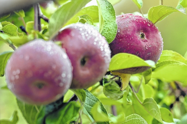 Dorrance Township orchards are an apple lover's dream