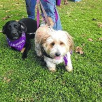 Relay for Life of Wyoming Valley to hold Bark for Life pet walk Oct. 24 at Kirby Park in Wilkes-Barre to benefit American Cancer Society