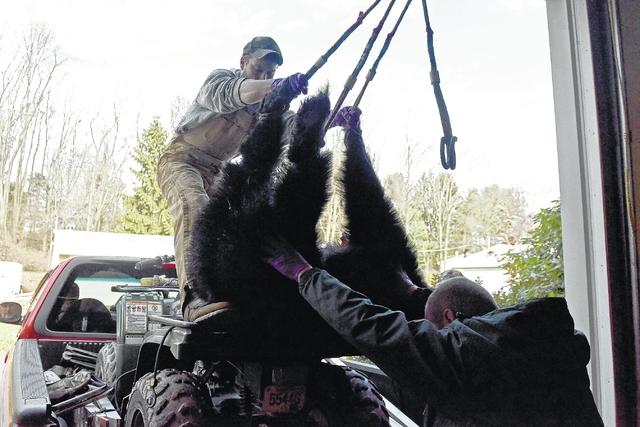 2015 bear harvest ahead of last year's pace