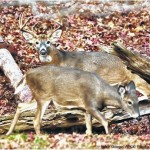 Unpredictable conditions await deer hunters on opening day