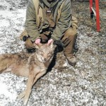 Huntington Mills United Sportsmen Camp 271 coyote hunt breaks record