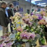Our Opinion: Home and Garden Show allows spring to take root (in spirit)