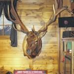 Historic PA elk on display