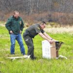 PGC releases endangered bird American Bittern after recovery from broken wing