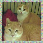 Sammy and Suzie are at Blue Chip Farm Animal Refuge awaiting a fur-ever home