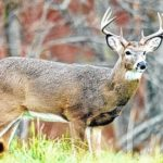 Patience key for upcoming archery season